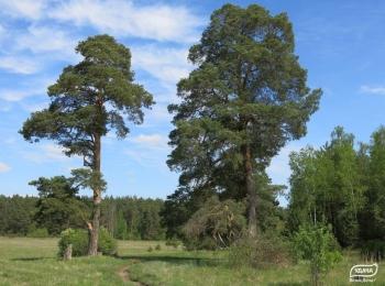 Коттеджный поселок Окские леса